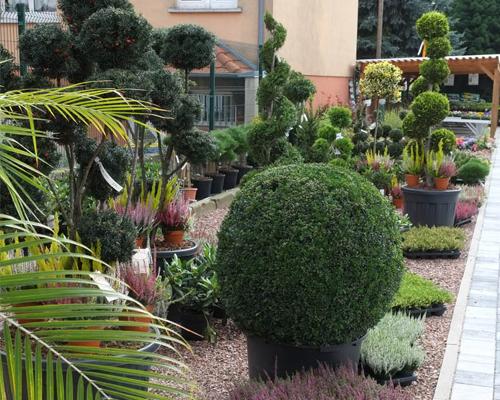 Plantes d ext rieur schwarz for Plantes d ornement exterieur