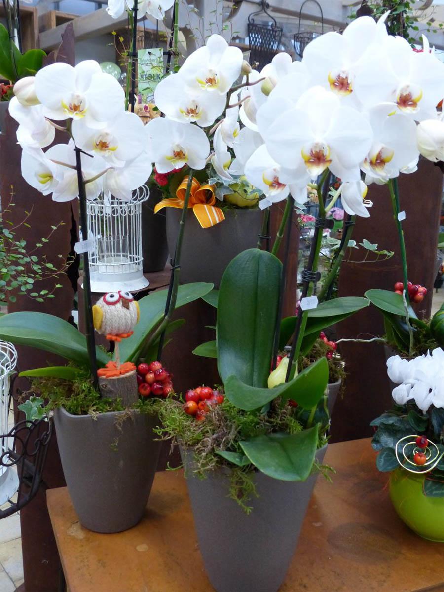 Plantes fleuries et vertes schwarz - Plantes fleuries d interieur ...