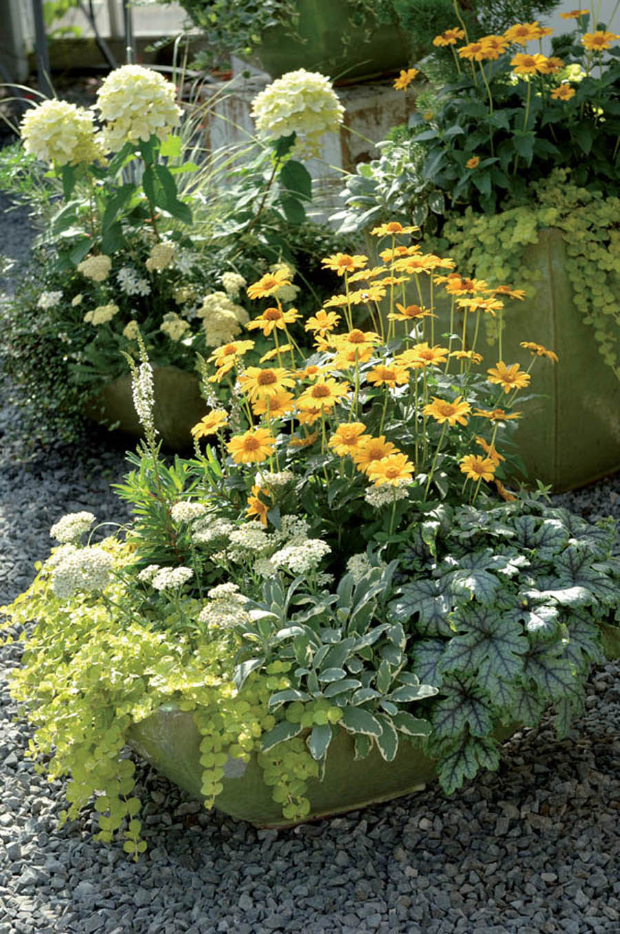 Plantes vivaces schwarz for Plantes fleuries vivaces