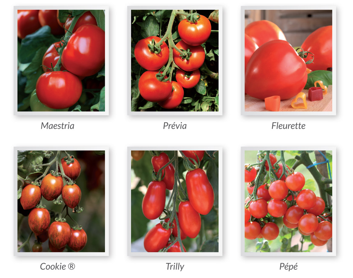 tomates-selection-du-chef