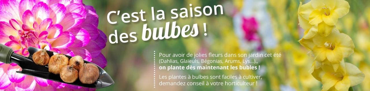 bulbe-alsace