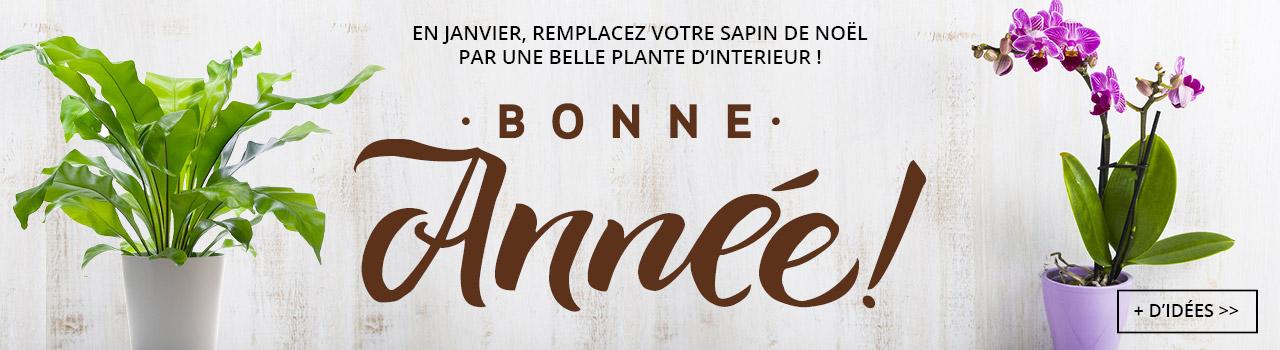 Bonne-annee-btn