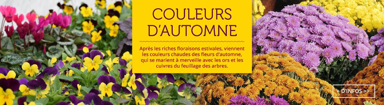 fleurs-couleurs-automne-btn
