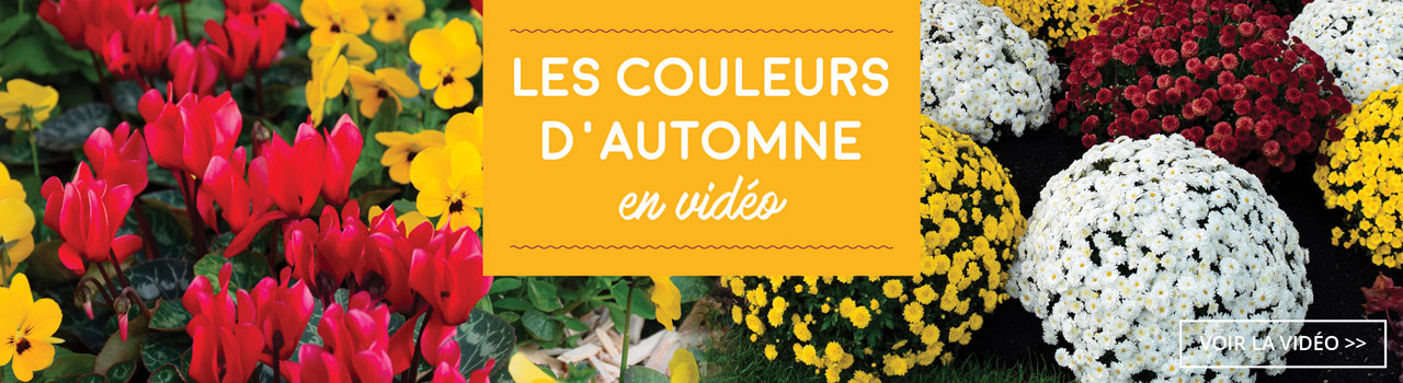 slider_video_automne_btn