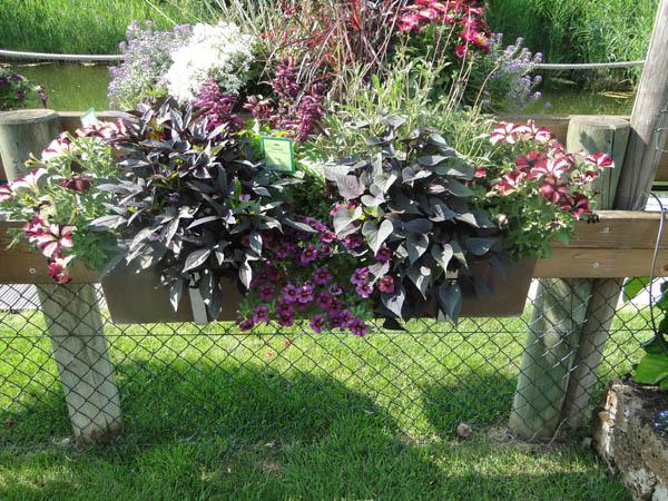 Plante jardinière et vasque – Schwarz