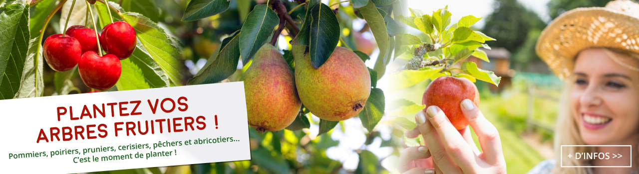 plantez-arbres-fruitiers